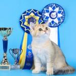 DORIAN  (BEST KITTEN )