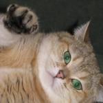 Nikoletta Peppercats (ny 11)